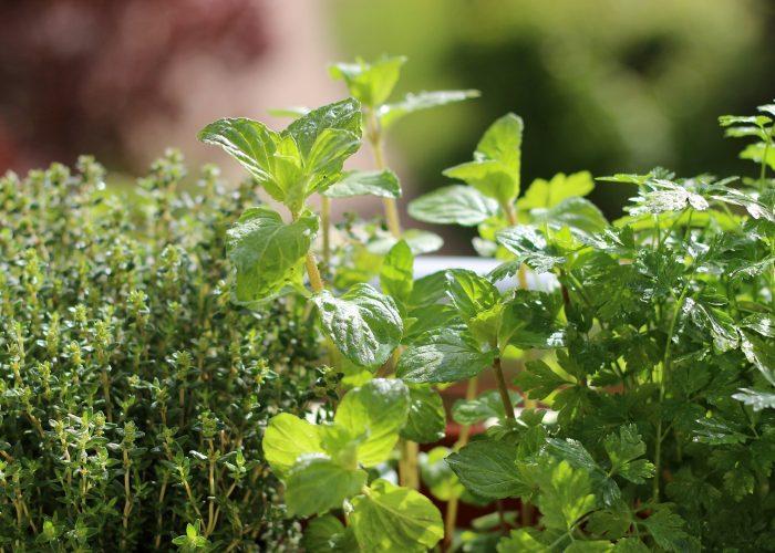 Kraeuterpflanzen