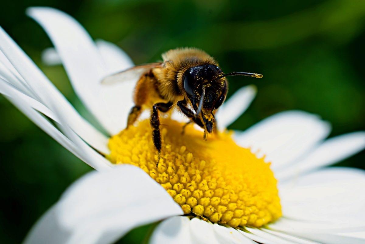 Bienengarten